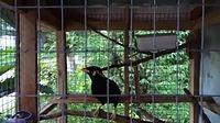 นกร้องเพลง แน่นอก.mp4