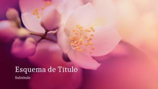 Flor de cerejeira.pptx
